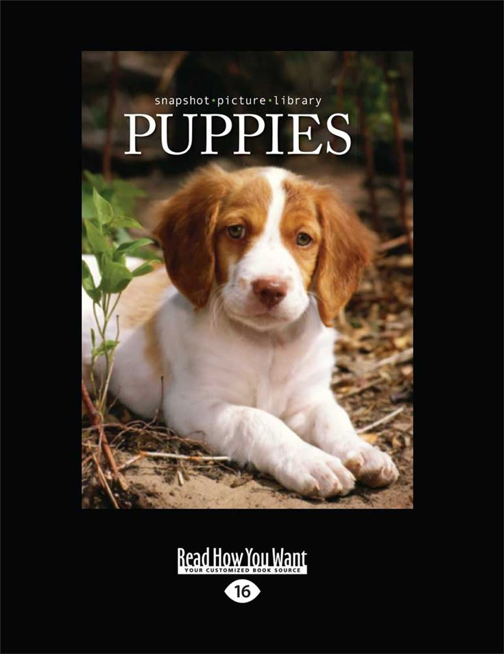 Snapshot Picture Library: Puppies